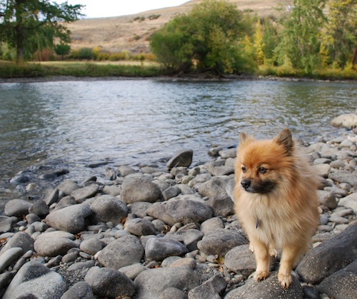 Rufus enjoying a moment in favorite spot along the river.